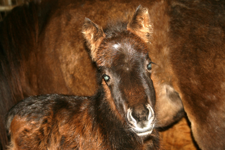 Hickory Springs New Filly
